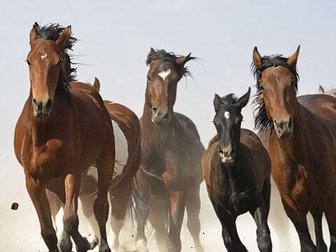 Ladislav Houska - JHL Saddles